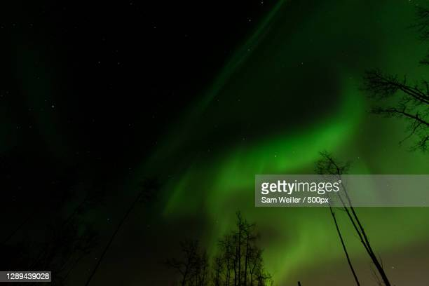 low angle view of trees against sky at night,fairbanks,alaska,united states,usa - mystery stock pictures, royalty-free photos & images