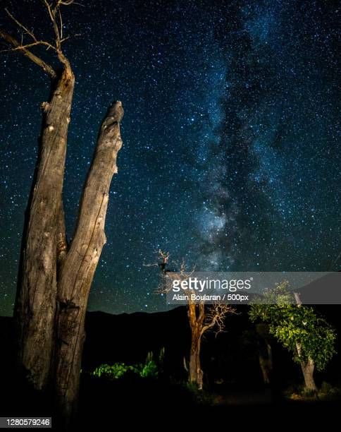 low angle view of trees against sky at night,mono county,california,united states,usa - central california stock pictures, royalty-free photos & images