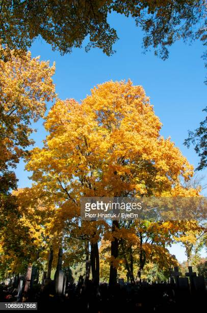 low angle view of trees against sky during autumn - piotr hnatiuk stock pictures, royalty-free photos & images