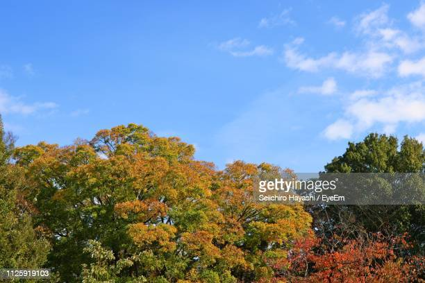 low angle view of trees against sky during autumn - seiichiro hayashi ストックフォトと画像