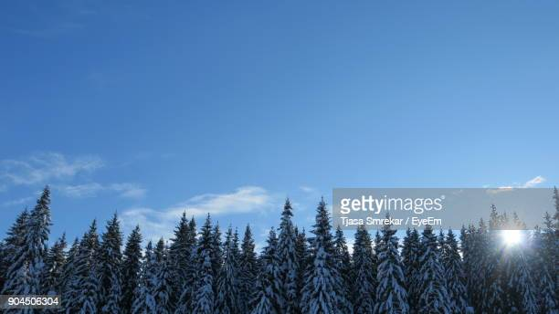 Low Angle View Of Trees Against Sky During Winter