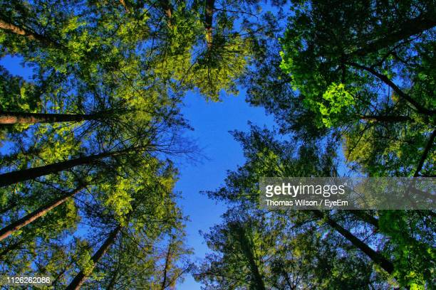 low angle view of trees against sky - lily wilson stock pictures, royalty-free photos & images