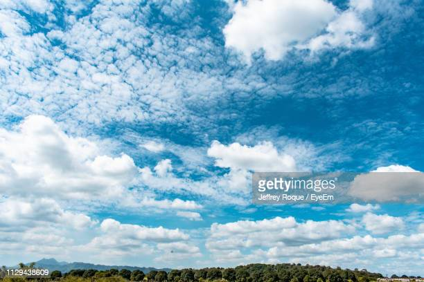low angle view of trees against sky - jeffrey roque stock photos and pictures