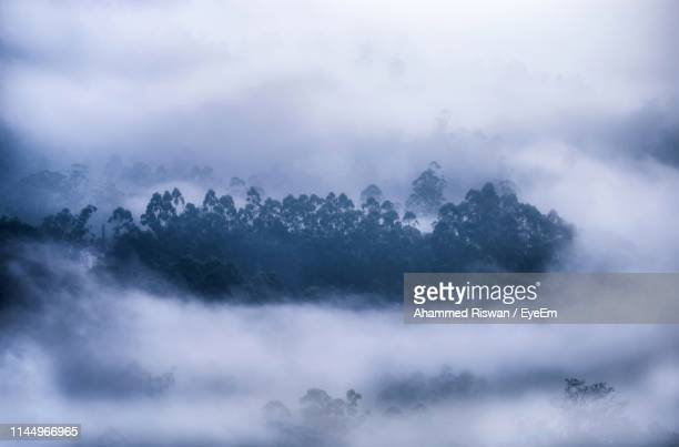 low angle view of trees against sky - monsoon stock pictures, royalty-free photos & images