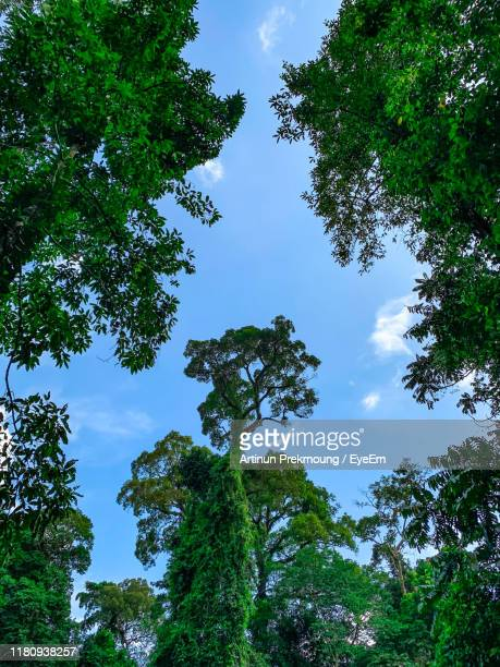 low angle view of trees against sky - low angle view photos et images de collection