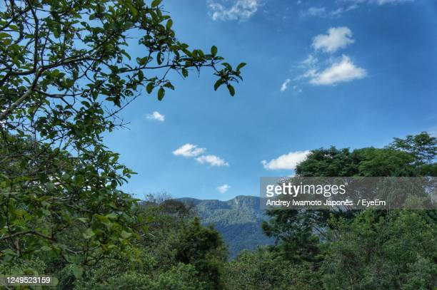 low angle view of trees against sky - japonês stock pictures, royalty-free photos & images