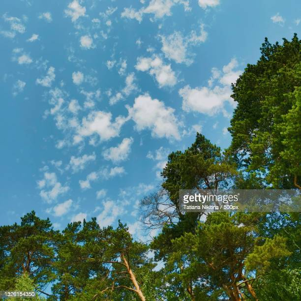 low angle view of trees against sky - nikitina stock pictures, royalty-free photos & images