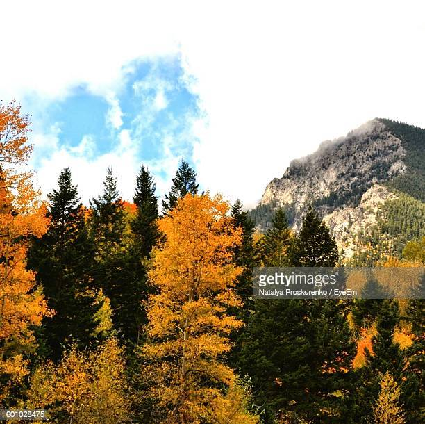 low angle view of trees against sky - highlands ranch colorado stock pictures, royalty-free photos & images