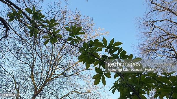 low angle view of trees against sky - salah stock photos and pictures