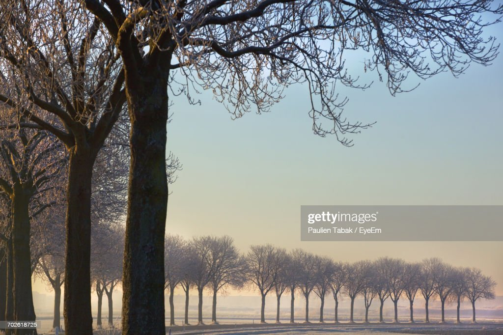 Low Angle View Of Trees Against Sky : Stockfoto