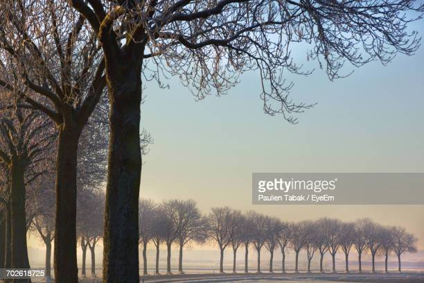 low angle view of trees against sky - paulien tabak stock pictures, royalty-free photos & images