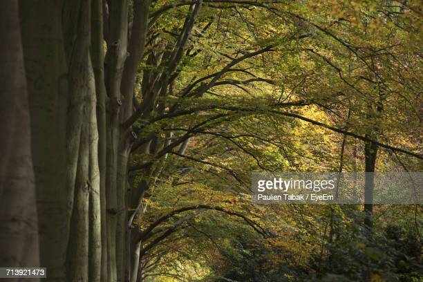 low angle view of trees against sky - paulien tabak foto e immagini stock