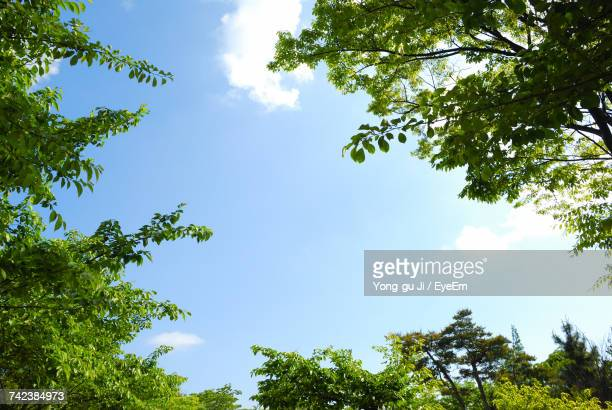 low angle view of trees against sky - low angle view stock pictures, royalty-free photos & images