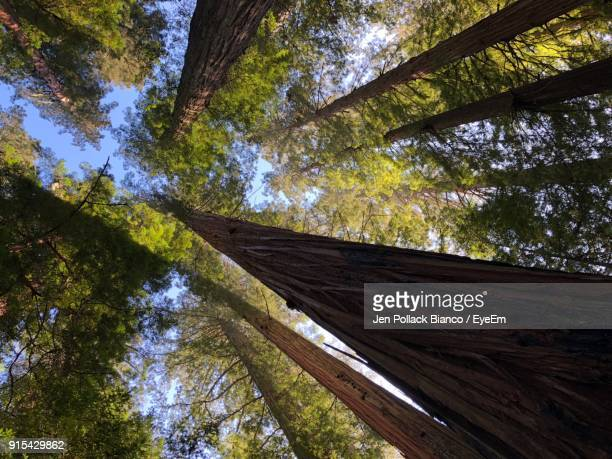 low angle view of trees against sky - humboldt redwoods state park stock photos and pictures