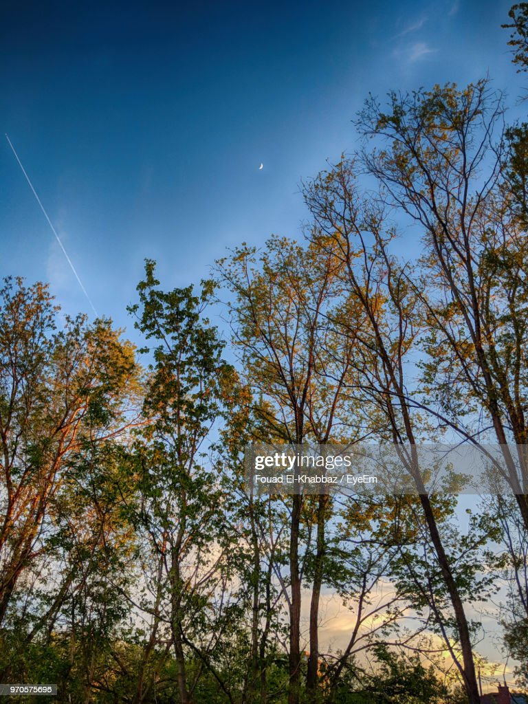 Low Angle View Of Trees Against Sky : Stock Photo