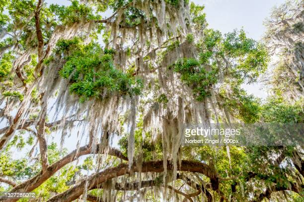low angle view of trees against sky,inverness,florida,united states,usa - norbert zingel stock-fotos und bilder
