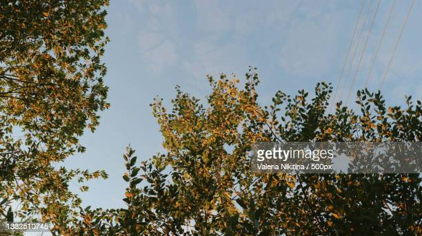 low angle view of trees against sky,russia - nikitina stock pictures, royalty-free photos & images