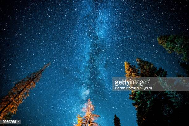 low angle view of trees against star field at night - yosemite nationalpark stock pictures, royalty-free photos & images