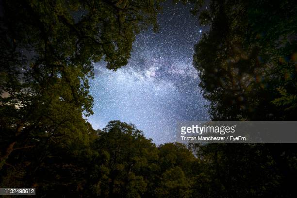 low angle view of trees against star field in sky at night - canopy stock pictures, royalty-free photos & images