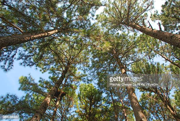 Low Angle View Of Trees Against The Sky