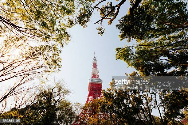 Low angle view of trees against Tokyo Tower