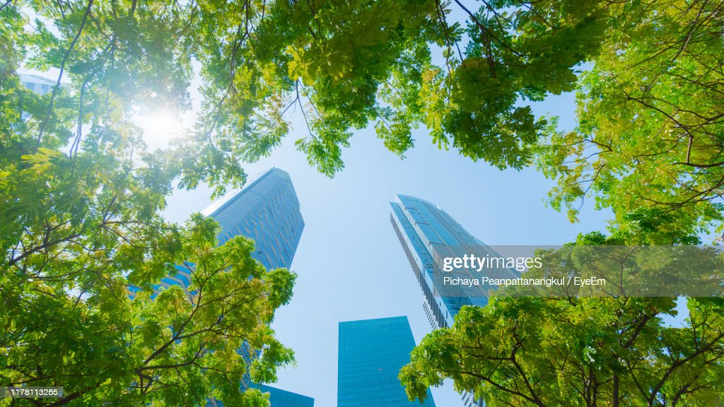 Low Angle View Of Trees And Buildings Against Sky : Stock Photo