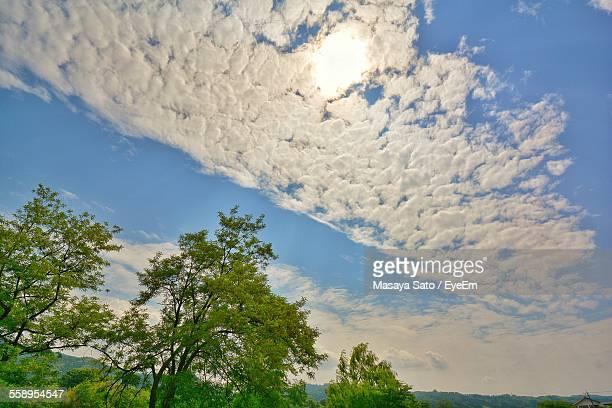 low angle view of trees and cloudscape - maebashi city stock photos and pictures