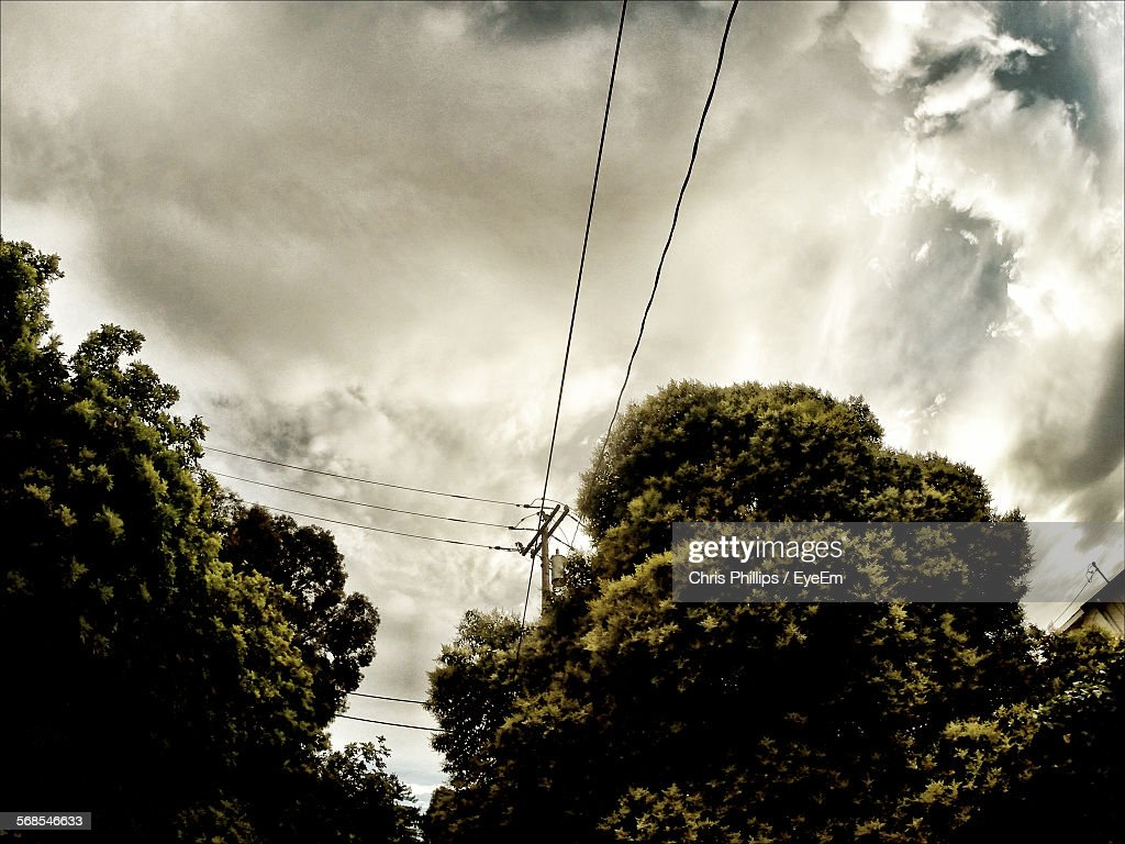 Low Angle View Of Trees And Electricity Pylon Against Cloudy Sky : Stock Photo
