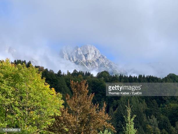 low angle view of trees and plants against sky - leogang stock pictures, royalty-free photos & images