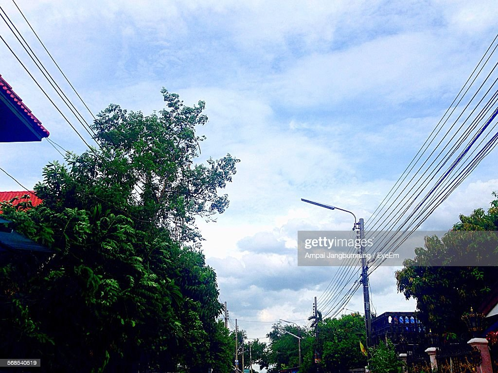Low Angle View Of Trees And Telephone Poles Against Sky : Stock Photo