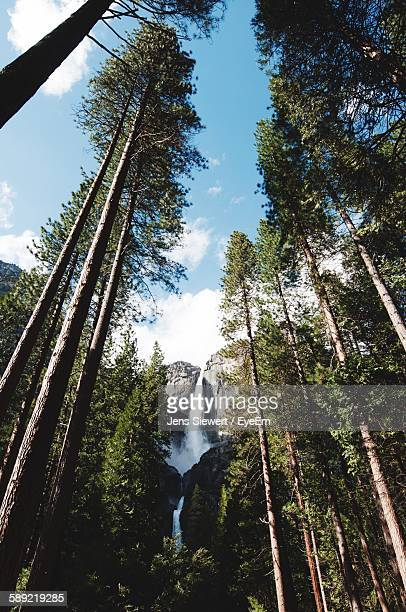 Low Angle View Of Trees And Waterfall In Forest Against Sky