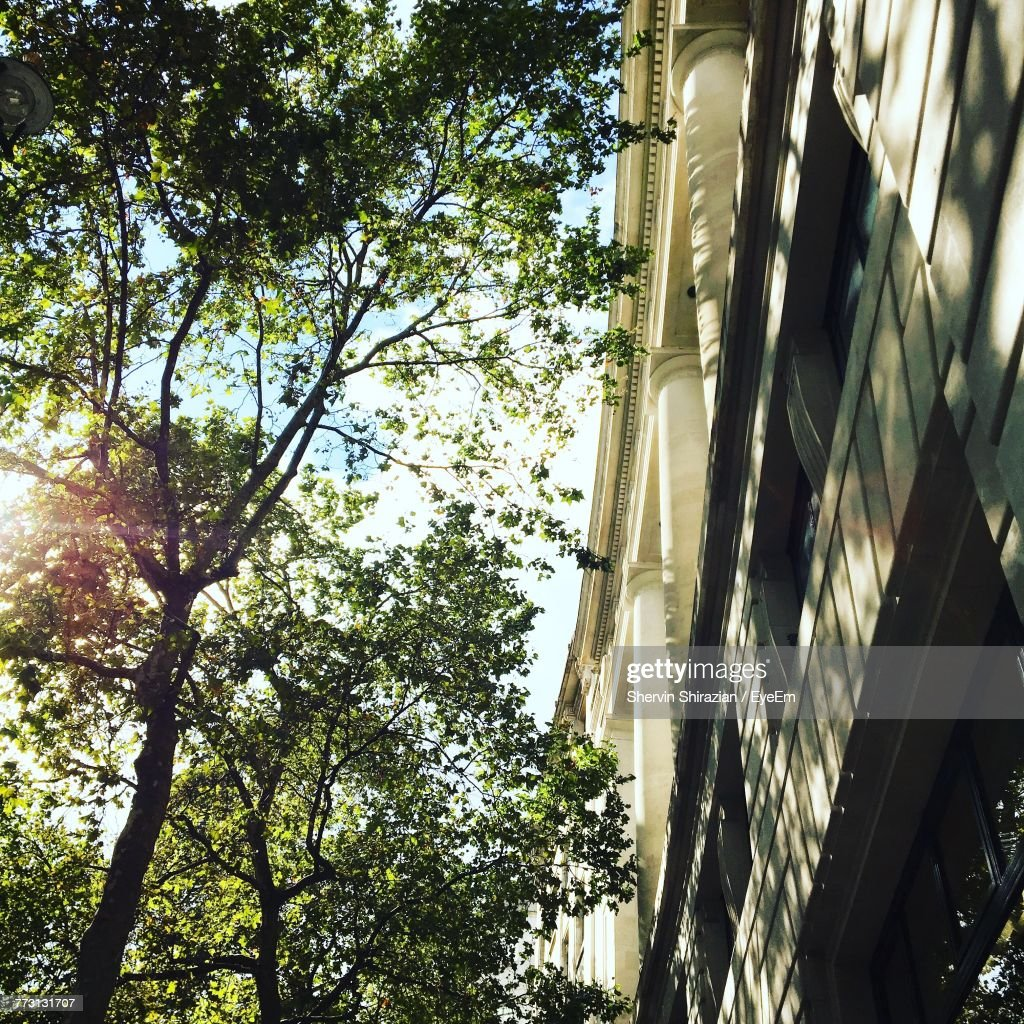 Low Angle View Of Trees By Building : Photo