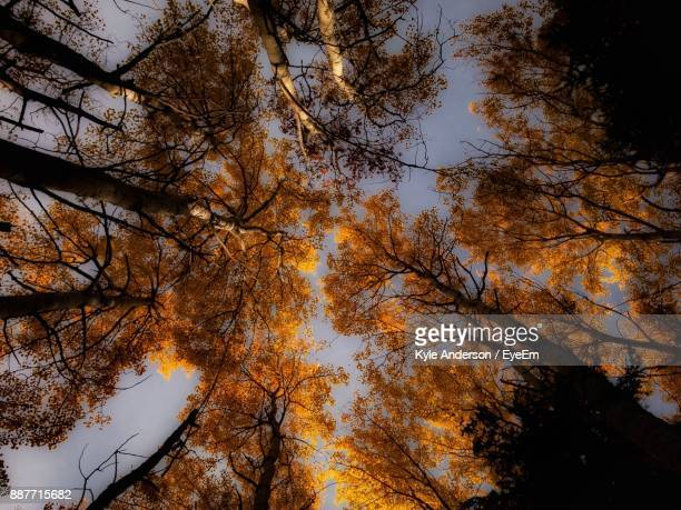 Low Angle View Of Trees During Autumn