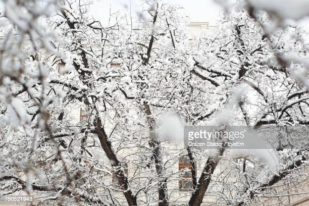 low angle view of trees during winter - drazen stock pictures, royalty-free photos & images