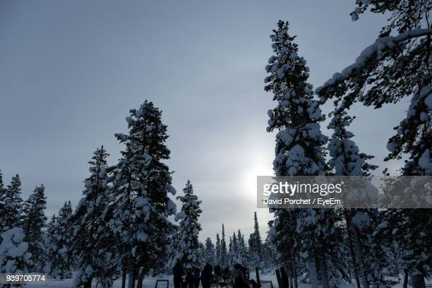 low angle view of trees during winter - david porchet photos et images de collection