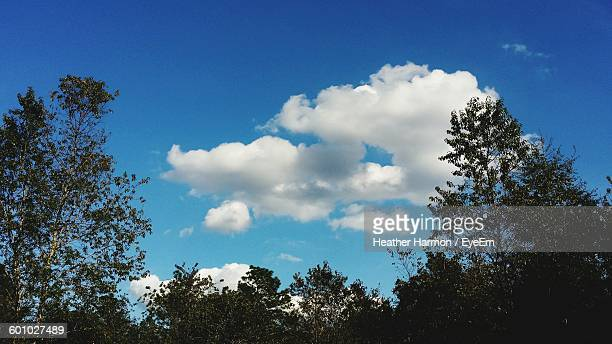 low angle view of trees growing against sky - heather harmon photos et images de collection