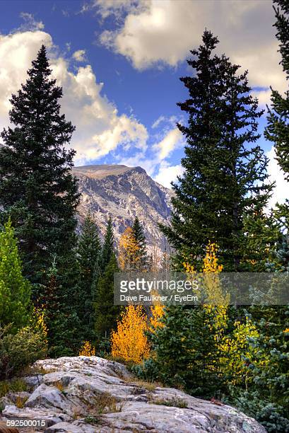 low angle view of trees growing by mountain against sky at breckenridge - dave faulkner eye em stock pictures, royalty-free photos & images