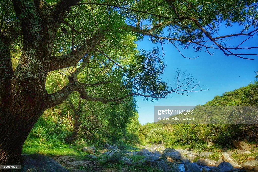 Low Angle View Of Trees Growing On Field Against Sky : Stock Photo
