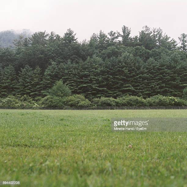 Low Angle View Of Trees Growing On Grassy Field