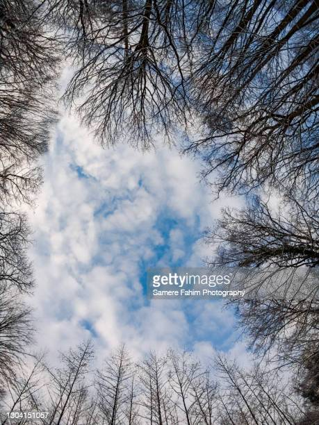 low angle view of trees in a forest - hainaut stock pictures, royalty-free photos & images