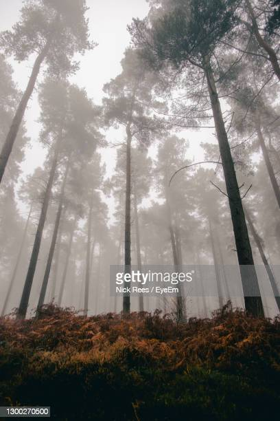 low angle view of trees in forest against sky, moody colour - atmospheric mood stock pictures, royalty-free photos & images