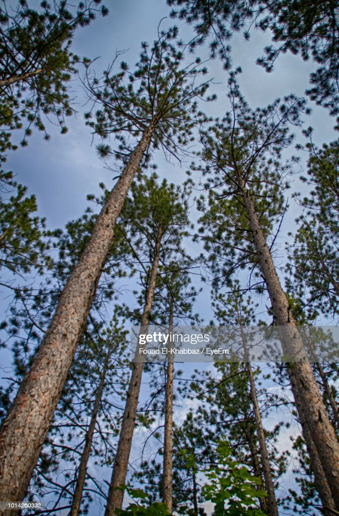 Low Angle View Of Trees In Forest Against Sky : Stock Photo