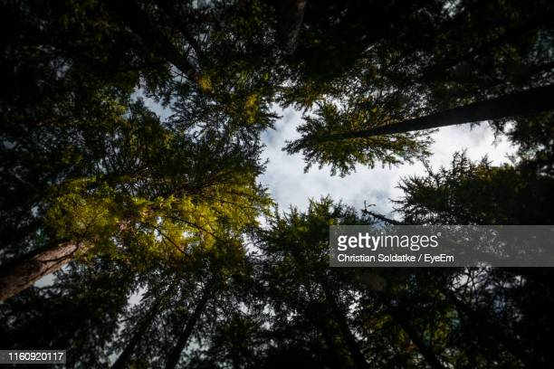 low angle view of trees in forest against sky - christian soldatke stock pictures, royalty-free photos & images