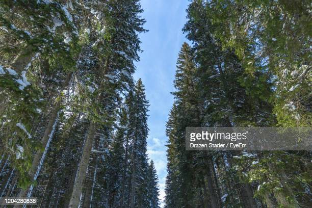 low angle view of trees in forest against sky - drazen stock pictures, royalty-free photos & images