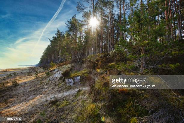 low angle view of trees in forest against sky - latvia stock pictures, royalty-free photos & images