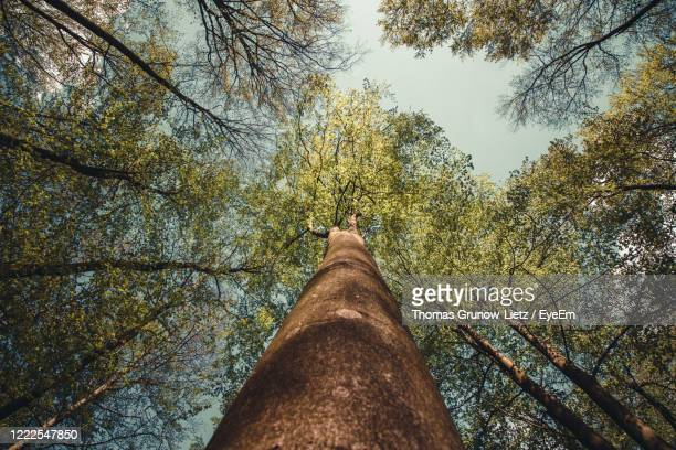 low angle view of trees in forest against sky - low angle view stock-fotos und bilder