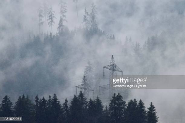 low angle view of trees in forest and electricity pylons in rising fog - gerhard hagn stock-fotos und bilder