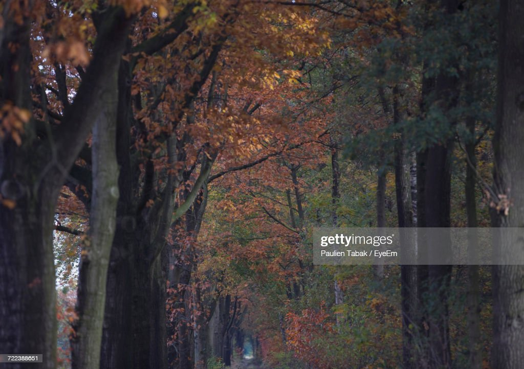 Low Angle View Of Trees In Forest During Autumn : Stockfoto