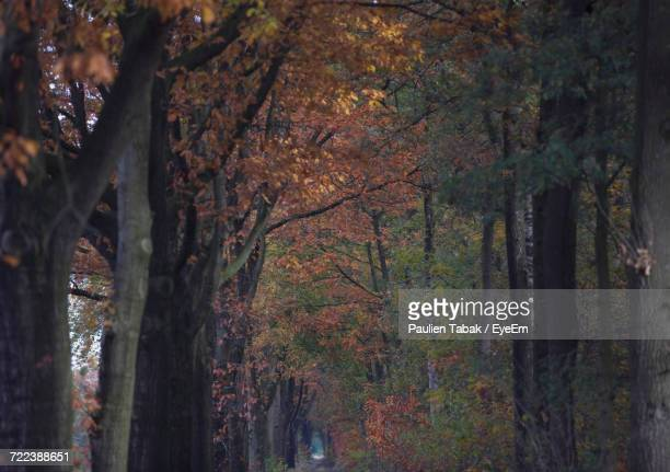 low angle view of trees in forest during autumn - paulien tabak stock-fotos und bilder