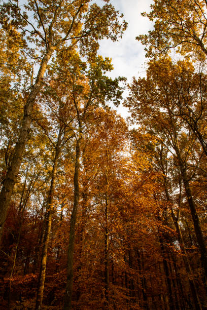 Low Angle View Of Trees In Forest During Autumn, Svendborg, Denmark